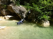 à la recherche de la faune des canyons!!